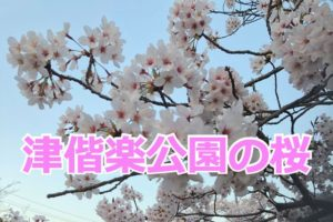 津偕楽公園の桜