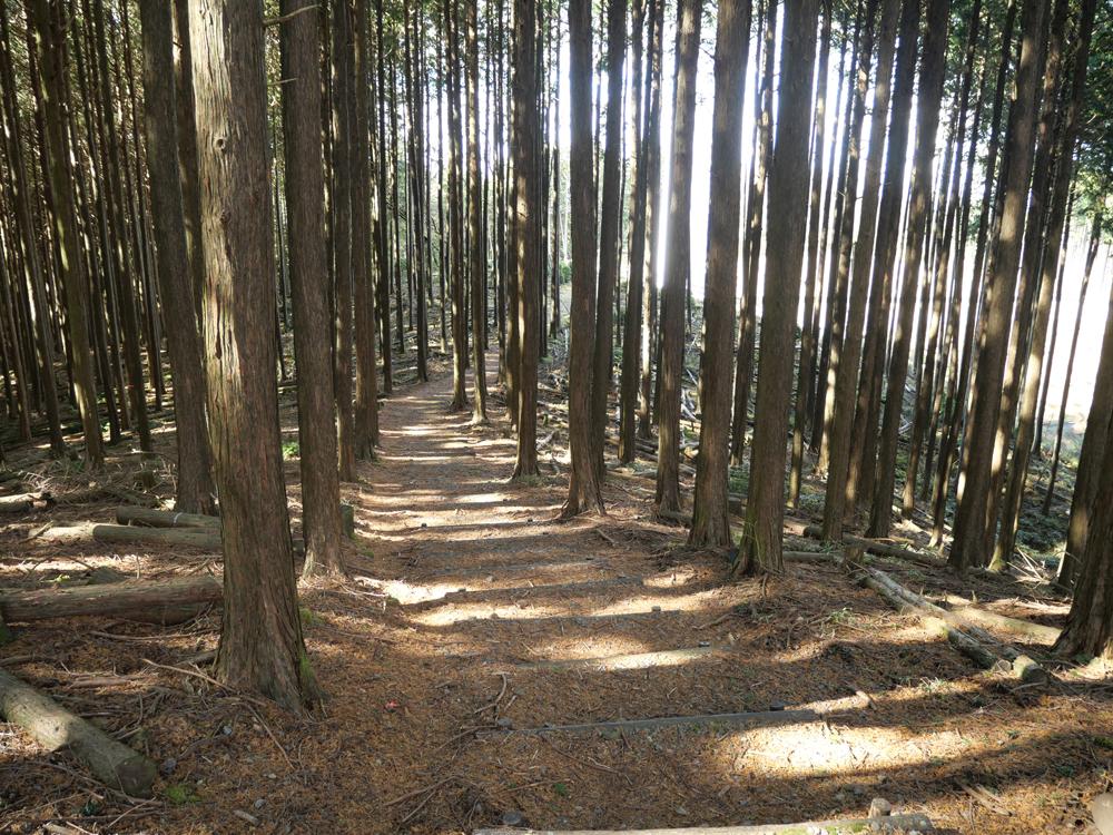奥山愛宕神社までの山道